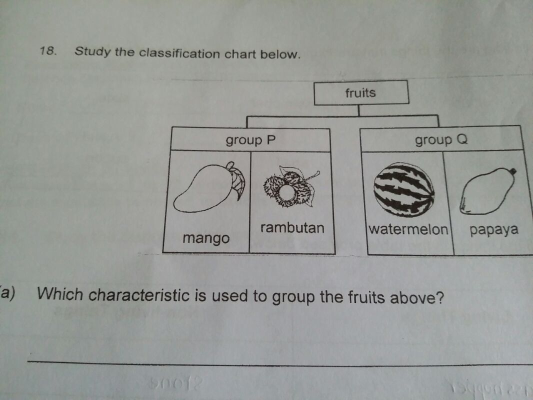 which charactaristic is used to group fruits?